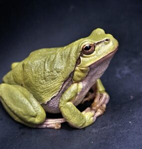 Frogs in Ancient Egypt