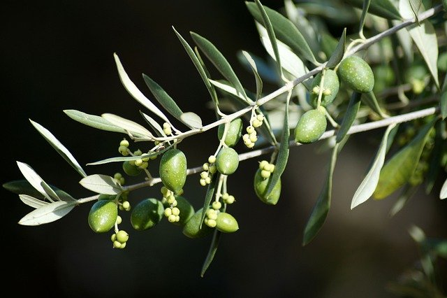 Olive branch / Greek symbol of peace.