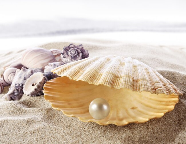 Shell with white pearl.