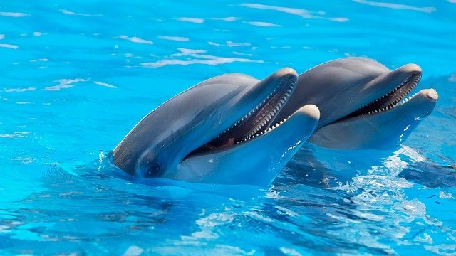 Pair of dolphins.