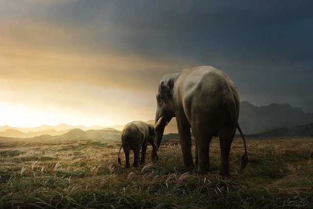 Mother and baby elephant.